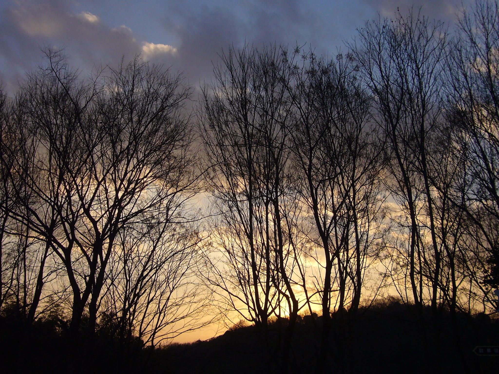 樹々の冬.jpg