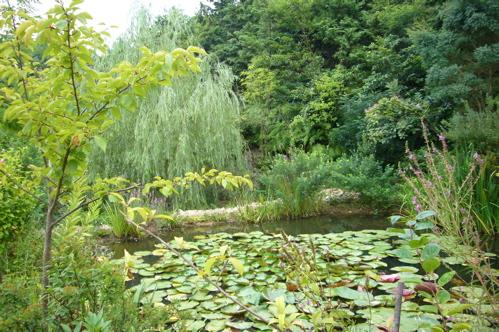 地中美術館の庭.jpg