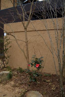 冬の庭.jpg